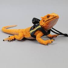 indo raptor lizard bearded dragon