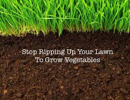 lawn to grow veggies