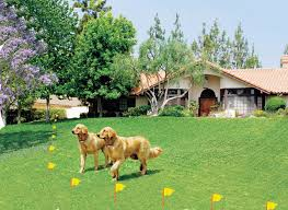 Invisible Underground Dog Fence Installation Contractor Sales And Service