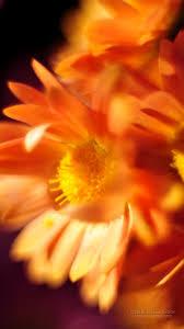 Iphone 6 خلفيات الطبيعة Iphone 6 صور جميلة 790410