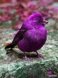 12 Beautiful Purple Colored-Birds That You Didn't Know It Before ...
