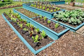 try no till gardening at home