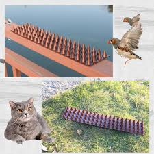 Best Offer A4ac 2 20pcs Wall Fence Bird Spikes Anti Climb Security Cat Bird Repellent Deterrent For Use On Fences Walls Sheds Railings Ledges Cicig Co