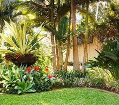 tropical landscaping king palm trees