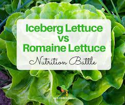 t tip iceberg lettuce vs romaine