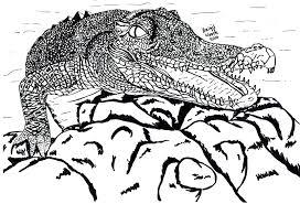 Tekening Van Een Krokodil Getekend Door Brigit Weeda