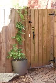 Training Our Wisteria Diy Pvc Pipe Garden Arbor 17 Apart