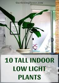 10 tall indoor low light plants large