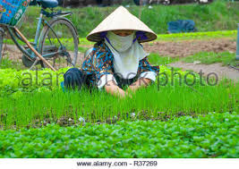 planting seedlings amongst other crops