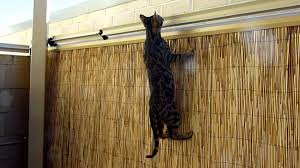 Oscillot Cat Containment System Dudeiwantthat Com