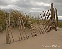 Beach Dune And Fence