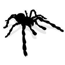 Amazon Com Giant Spider Vinyl Wall Decal 35 7 Wide X 27 8 Tall Handmade