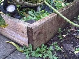 raised bed garden out of douglas fir