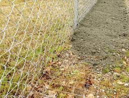 Greg Pryor Rabbit Proof Fence Design Seems To Be Working Home Garden Scnow Com
