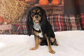 Saint Antoine Dog Grooming added a new... - Saint Antoine Dog Grooming