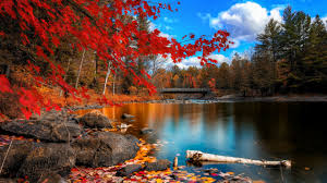river nature trees fall wallpapers