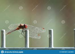 279 Red Firefly Photos Free Royalty Free Stock Photos From Dreamstime