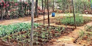 smart kitchen garden to promote organic