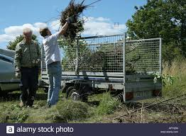 Two Men Loading A Trailer With Cut Down Branches And Leaves From A Stock Photo Alamy