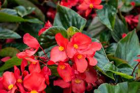 growing annual nia plants
