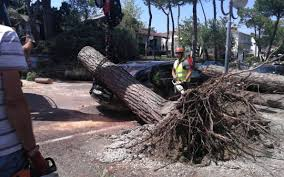 Maltempo a Milano Marittima e Cervia: abbattuti 200 pini. FOTO ...