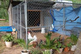 Fence Panels For Walls Of Coop Backyard Chickens Learn How To Raise Chickens