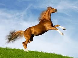 صور خيول حلوه