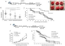 Synergistic potentiation of the anti-metastatic effect of anti EGFR mAb by  its combination with immunotherapies targeting the ganglioside NGcGM3 |  Oncotarget