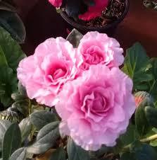 La Bella Flor,Vivero - Beiträge | Facebook