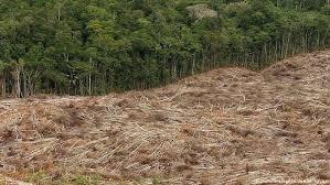Dados mostram explosão do desmatamento na Amazônia | Notícias e ...