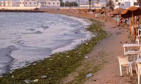 شواطئ المتوسط العربية بحر ملوث غير صالح للسباحة وأسماك تقتات