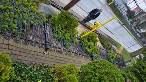 Thieves Try To Steal 150 Year Old Cast Iron Fence But Didn T Anticipate How Heavy It Is Cbc News