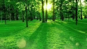 فيديو للمونتاج والتصميم بدون موسيقى فيديو أشجار خضراء وطبيعة