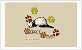 Amazon Com Cafepress Ferret Lover Rectangle Sticker Rectangle Bumper Sticker Car Decal Home Kitchen