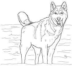 Husky Coloring Pages Husky Honden En Kleuren