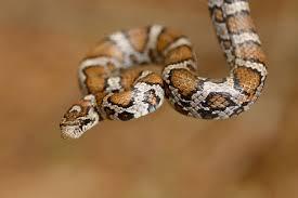 snake symbolism dreamessages