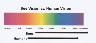 what do bees see bee culture