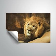 Bloomsbury Market Mondale Tribal Lion Removable Wall Decal Wayfair