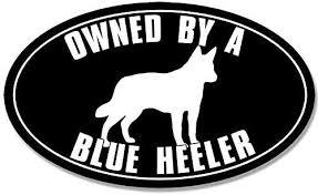Amazon Com Jr Studio 3x5 Inch Oval Owned By A Blue Heeler Sticker Decal Dog Breed Australian Cattle Vinyl Decal Sticker Car Waterproof Car Decal Bumper Sticker Kitchen Dining
