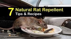 natural rat repellent