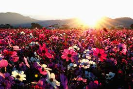 春天百花盛开的唯美图片写真- 唯一图库