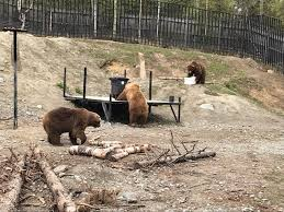 Electric Fence Project For Improved Human Bear Coexistence Defenders Of Wildlife