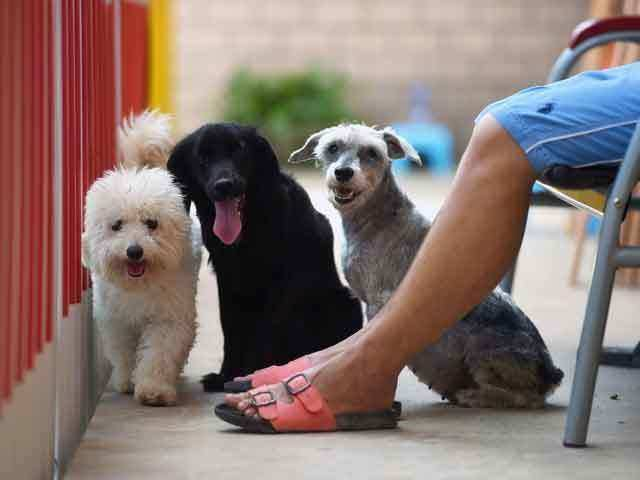 """Image result for Best dog training gadgets every dog owner should own in 2020"""""""