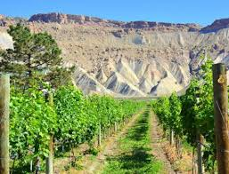 Colorado Wineries - Wine tours in Palisade - Things to do in Colorado