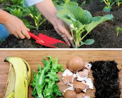 homemade vegetable garden fertilizers
