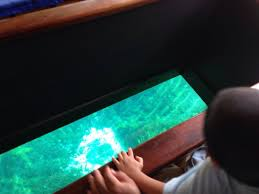 glass bottom boat view picture of the
