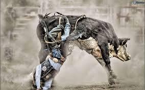 bull riding wallpapers wallpaper