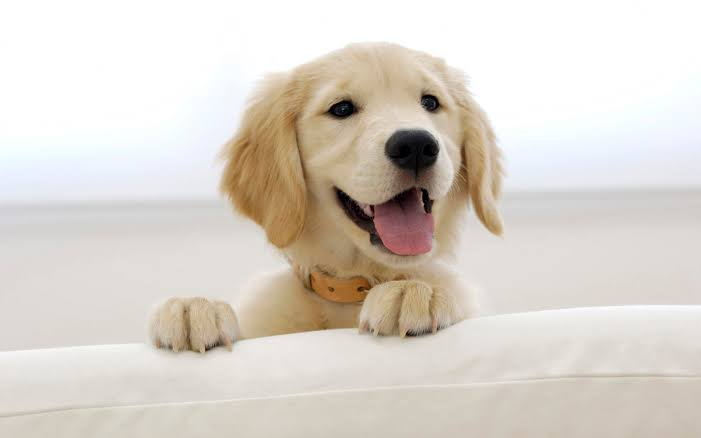 Image result for happy dog""
