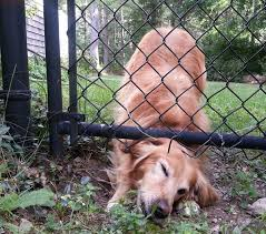 New Year S Resolution Dog Digging Solutions Quality Dog Fence