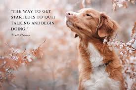 famous quotes presented by dogs pet friendly house